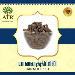 யானைத்திப்பிலி Yanai Thippili